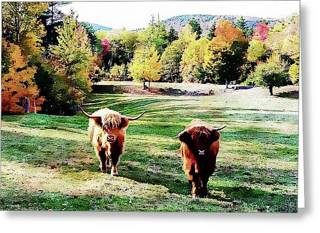 Greeting Card featuring the photograph Scottish Highland Cattle - New Hampshire Fall Foliage by Joseph Hendrix