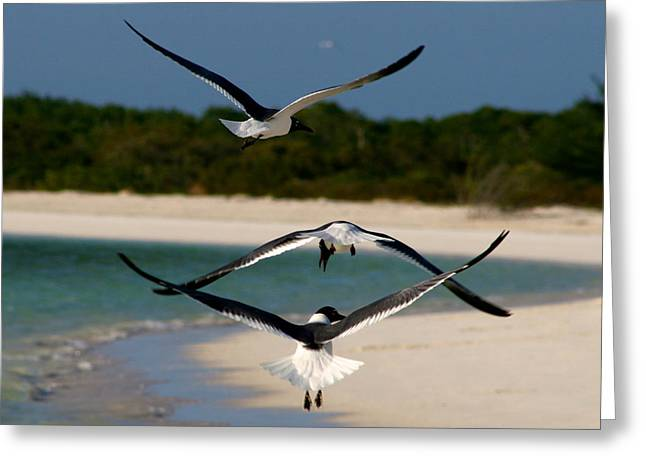 Sea Birds Greeting Card by Ivan SABO