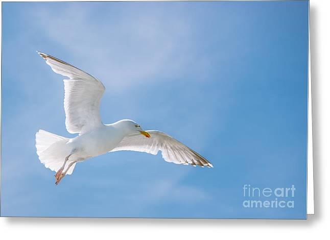 Seagull Flying High Greeting Card by Amanda Elwell