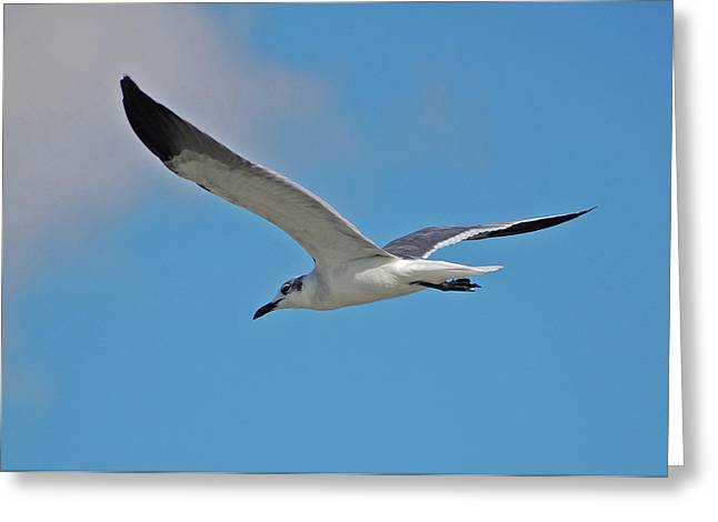 Greeting Card featuring the photograph 1- Seagull by Joseph Keane