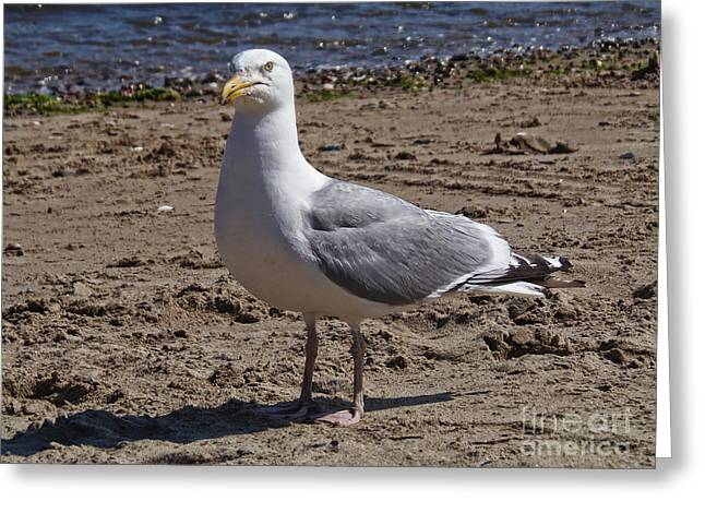 Seagull On Beach Greeting Card