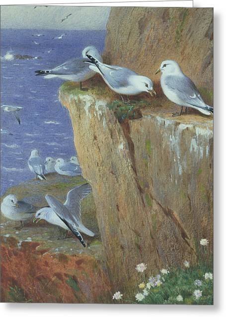Seagulls Greeting Card by Archibald Thorburn