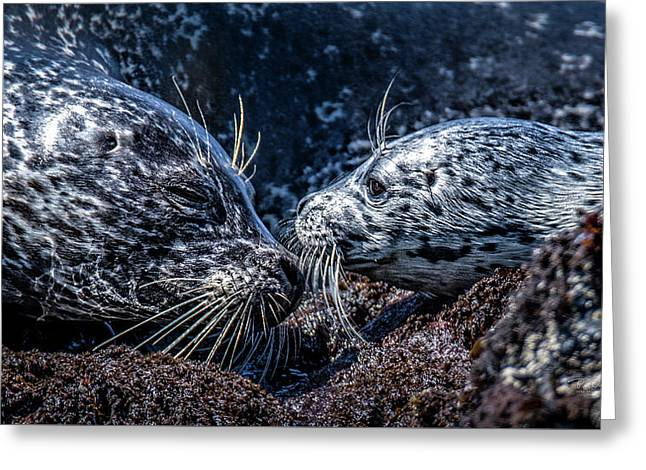 Seal Pup With Mom Greeting Card
