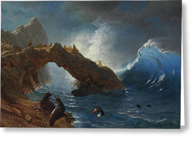 Seals On The Rocks Greeting Card by Albert Bierstadt