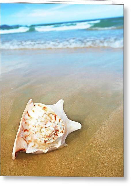Seashell Greeting Card by MotHaiBaPhoto Prints