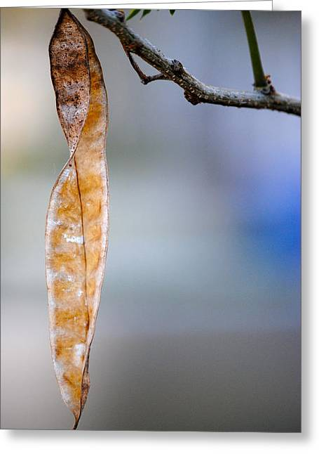 Seed Pod Greeting Card by Bransen Devey