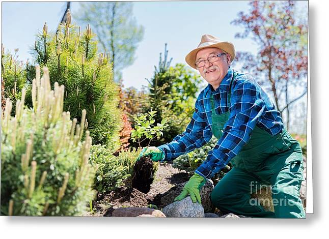 Senior Gardener Digging In A Garden. Greeting Card