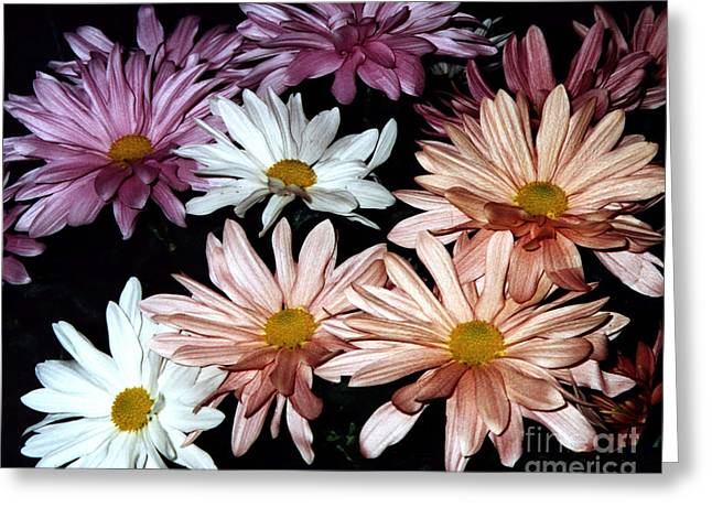 Greeting Card featuring the photograph Shasta Daisies by Merton Allen