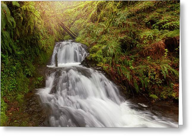 Shepperd's Dell Falls Greeting Card by David Gn