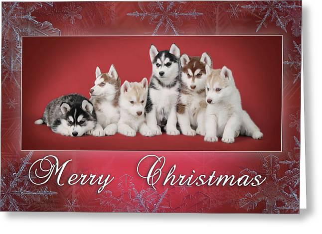 Husky Christmas Puppy.Siberian Husky Christmas Card