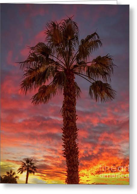 Silhouetted Palm Tree Greeting Card by Robert Bales