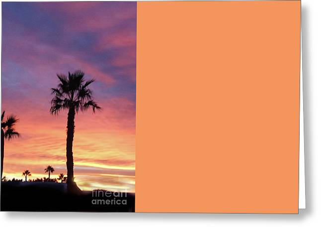 Silhouetted Palm Trees Greeting Card by Robert Bales