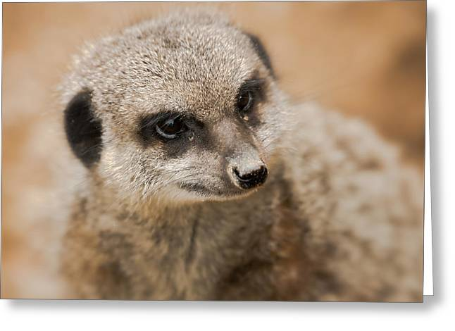 Simples Greeting Card by Chris Boulton