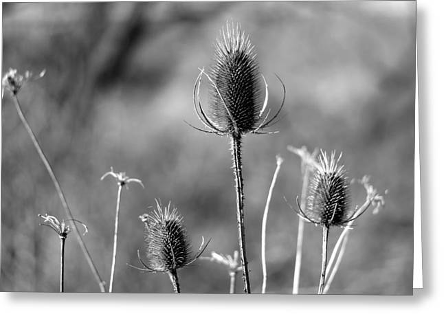 Simply Thistle Greeting Card