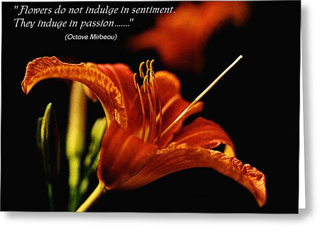 Single Tiger Lily Poster Greeting Card by Roger Soule