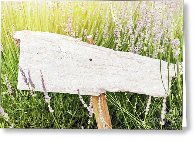 Guidepost greeting cards fine art america singpost in grass and lavender field rustic board greeting card m4hsunfo