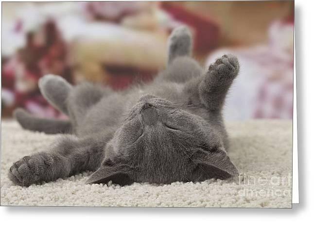 Sleeping Kitten Greeting Card by Jean-Michel Labat