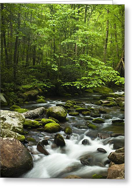 Nature Scene Greeting Cards - Smoky Mountain Stream Greeting Card by Andrew Soundarajan