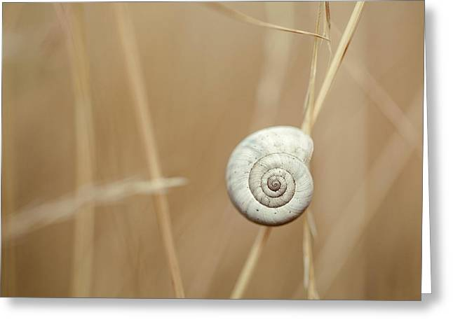 Snail On Autum Grass Blade Greeting Card