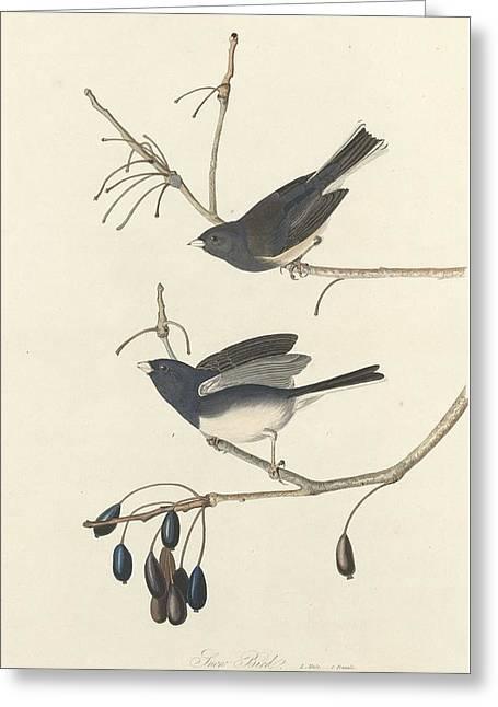 Snow Bird Greeting Card by Rob Dreyer