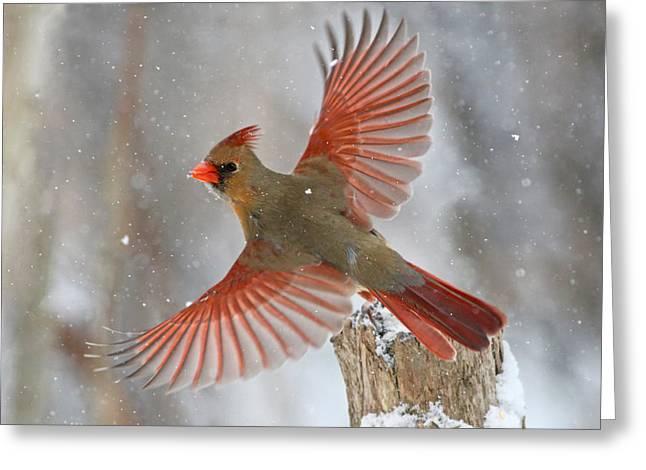 Snow Storm Greeting Card by Mircea Costina