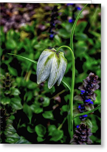 Snowdrop Greeting Card by Martin Newman