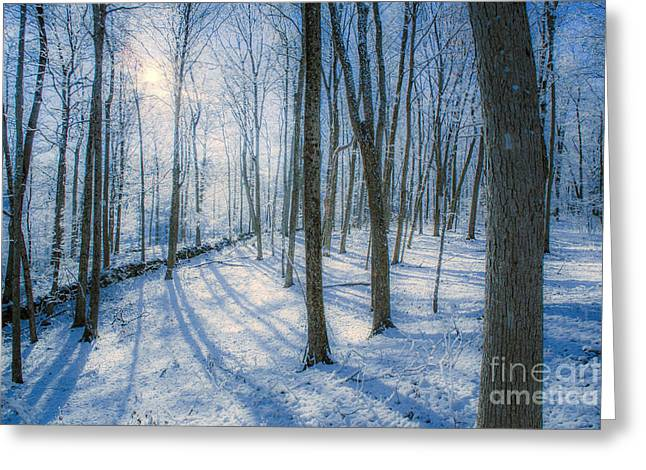 Snowy New England Forest Greeting Card by Diane Diederich