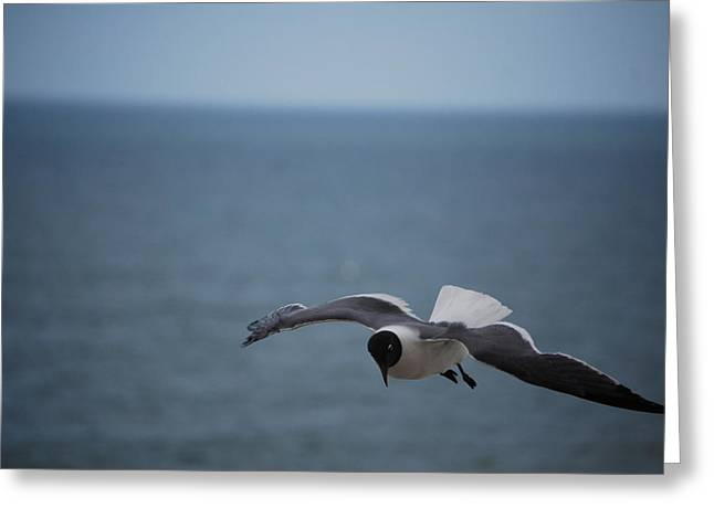 Greeting Card featuring the photograph Soaring by Debbie Karnes