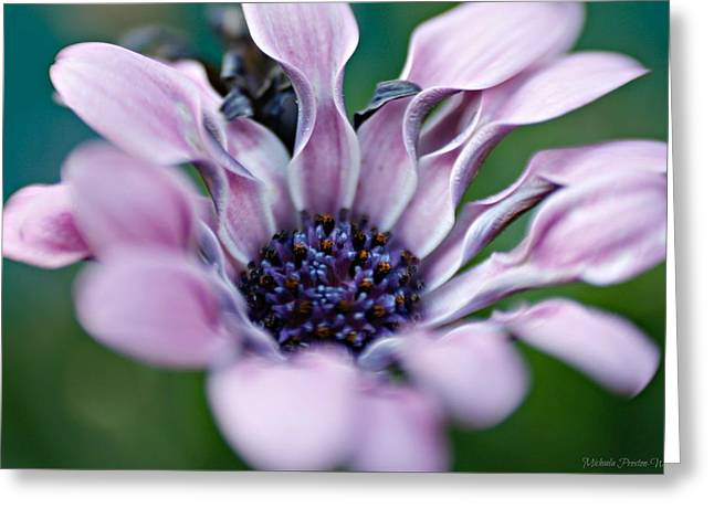 Greeting Card featuring the photograph Soft Purple by Michaela Preston