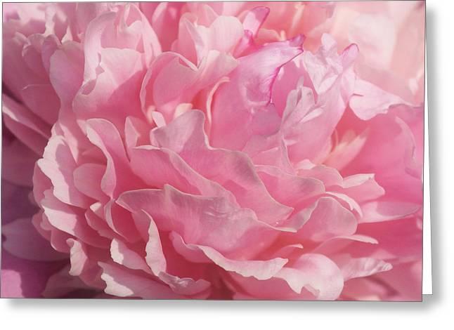 Softly Pink Greeting Card by Sandy Keeton