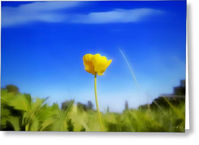 Solitary Flower Greeting Card