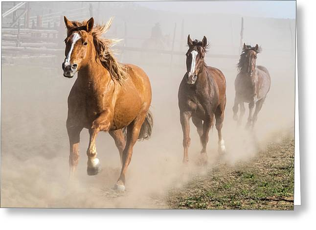 Sombrero Ranch Horse Drive At The Corrals Greeting Card