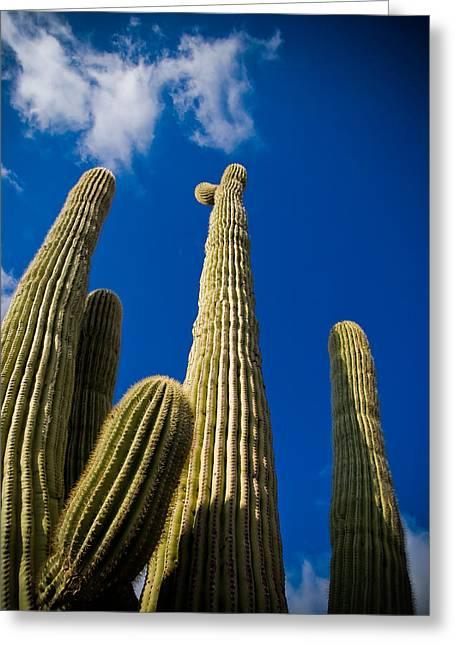 Sonoran Desert Greeting Card by Patrick  Flynn