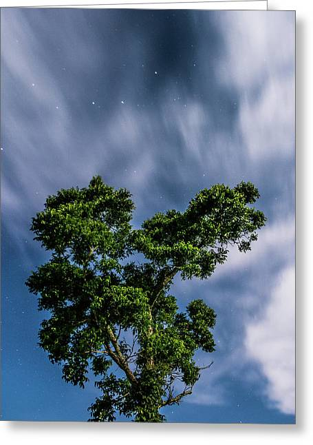 Sparkling Stars Greeting Card by Shelby Young