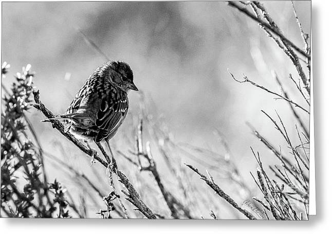 Snarky Sparrow, Black And White Greeting Card