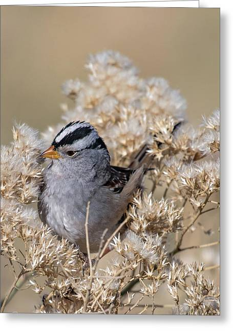 Sparrow Greeting Card