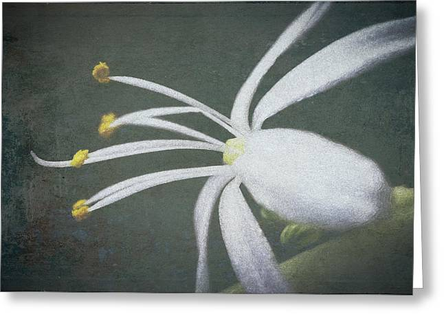 Spider Plant Flower II Greeting Card