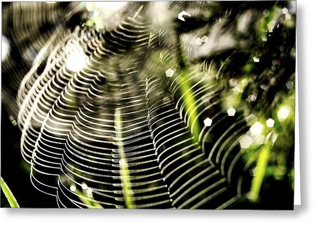 Spider's Web. Greeting Card by Bernard Jaubert