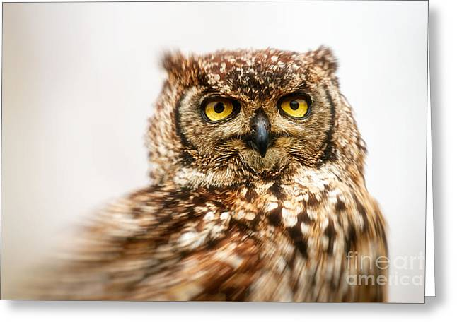 Spotted Eagle-owl  Greeting Card by Nick Biemans