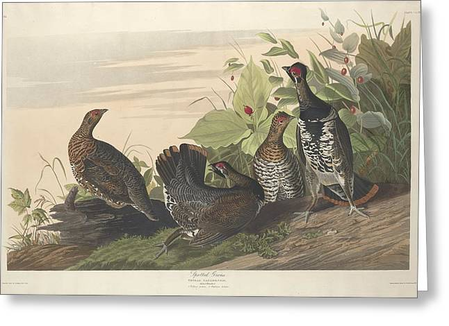 Spotted Grouse Greeting Card
