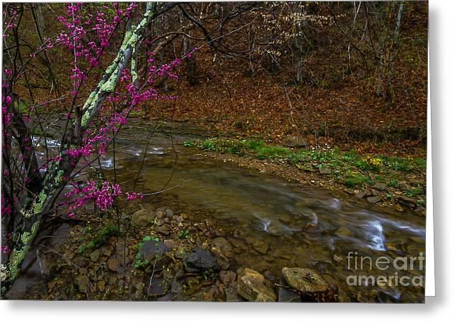Spring Along Anthony Creek Greeting Card by Thomas R Fletcher