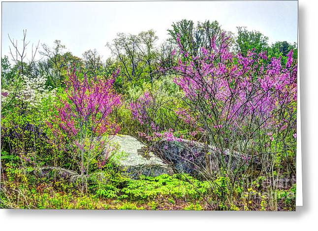 Spring At Devils Den Greeting Card by Paul W Faust - Impressions of Light