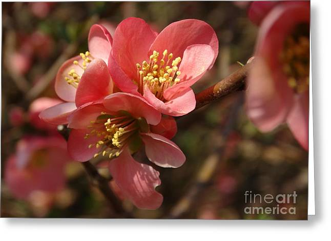 Spring Blooms Greeting Card by Rebecca Overton