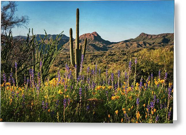 Greeting Card featuring the photograph Spring In The Sonoran  by Saija Lehtonen