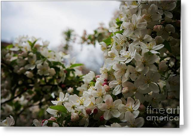 Spring Lanscape Greeting Card by Celestial Images