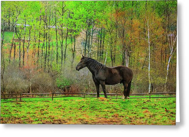 Greeting Card featuring the photograph Spring Pasture Colors by Dressage Design