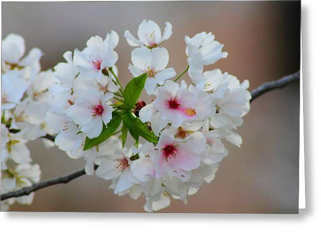 Springtime Bliss Greeting Card