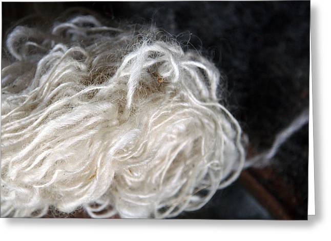 Greeting Card featuring the photograph Spun Wool by Joanne Coyle