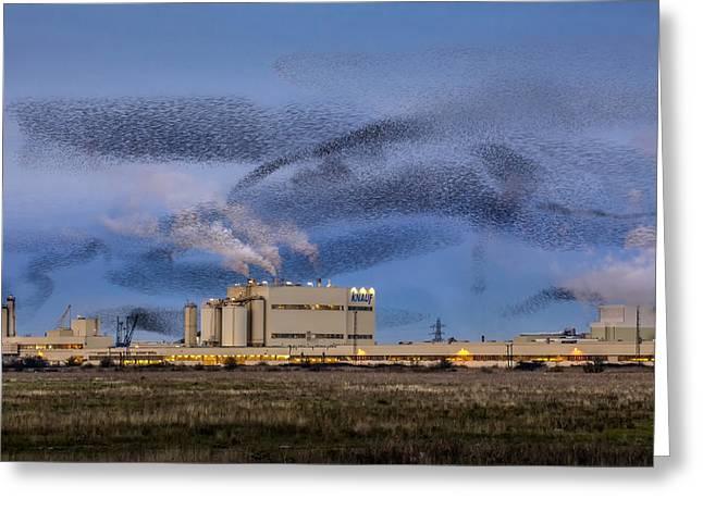 Starling Mumuration Greeting Card by Ian Hufton