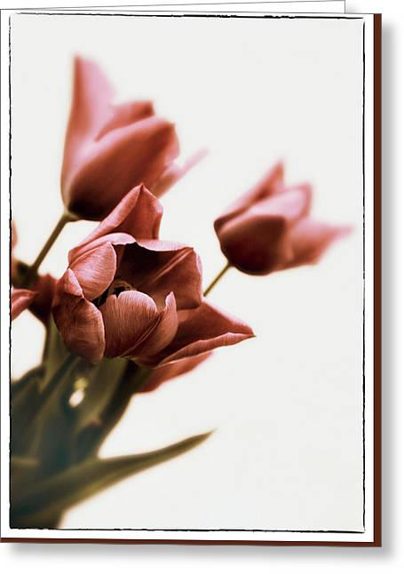 Greeting Card featuring the photograph Still Life Tulips by Jessica Jenney